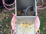Squirrel inside the feeder
