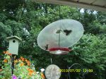 Hummingbirds on the feeder