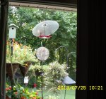Hummingbirds on the feeder
