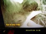 Bluebird eye partially open.