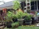 Contain garden