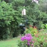 Watching the Bluebird house