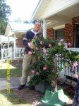Pink Mandavilla vine going to a new home