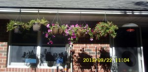 Hanging baskets along the eave