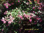 Pretty unknown flowers