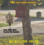 One little bird found the feeder.