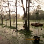 Flooded yard #2