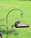 Squirrel on bird feeder