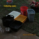 Containers with rain water