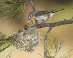Bird feeding babies