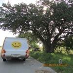 Roadside rest