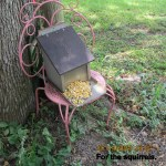 Food for squirrels