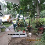 Trimmed tree limbs