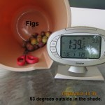 Figs; time and temperature