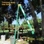 Trimmed dead limbs
