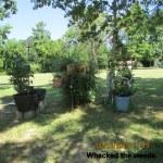 Whacking weeds (1)