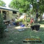 Whacking weeds (2)