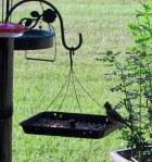 Bird on feeder (2)