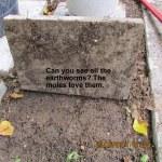 Moles love earthworms