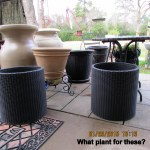 Planters for the patio