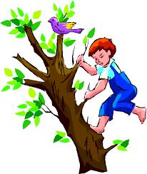 Climbing the family tree