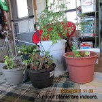 Outdoor plants are indoors