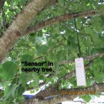 Sensor in nearby tree