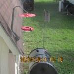 Hummingbird on my feeder