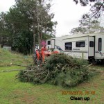 Pine branch clean up