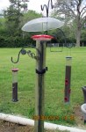 Hummingbird feeder (1)