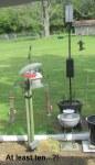 Golden Finches