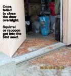 Spilled bird seed