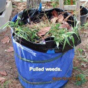 Pulled weeds