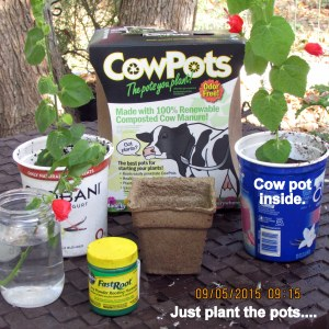 Cow Pots advertisement
