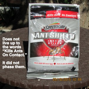 Ant control didn't control