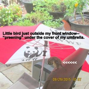 Little bird under my umbrella