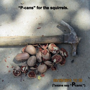 P-cans for the squirrels