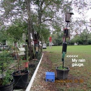 My rain gauge