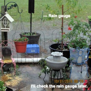 Later I'll check the rain gauge