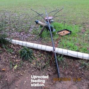 Uprooted feeding station