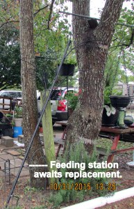 Feeding station leaning against the tree