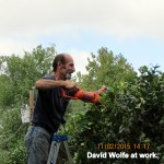 David cutting hedge (4)