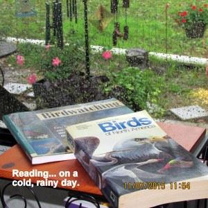 Reading bird books