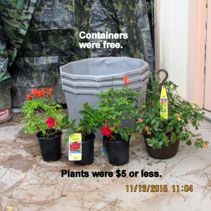 Close up of containers and plants