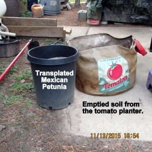 Emptied soil from tomato planter