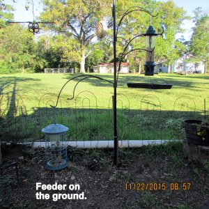 Feeder on the ground