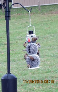 Birds on Snowman feeder