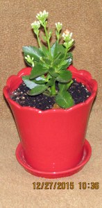 Kalanchoe planter