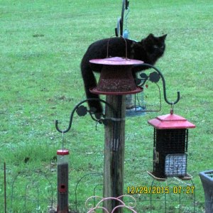 Black cat near bird feeders