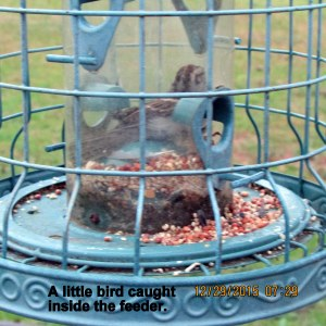 Bird inside feeder